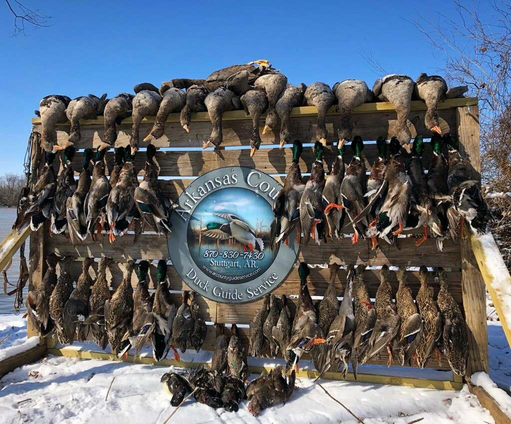stuttgart arkansas public duck hunting